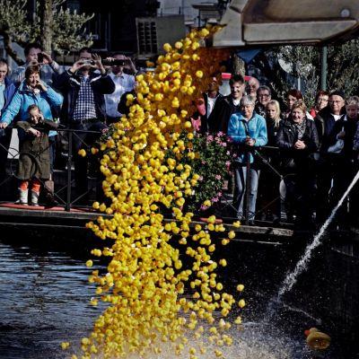 <strong>Duckrace Heerenveen</strong>