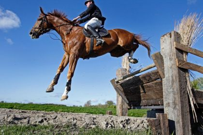 <strong>Cross country paardensport</strong>