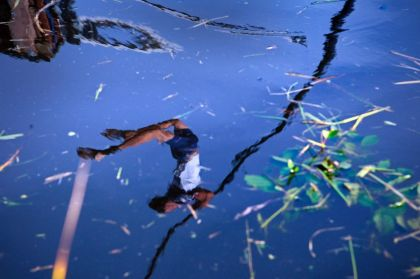 <strong>Fierljepper in het water</strong>
