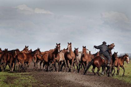 <strong>Paarden vangen</strong>