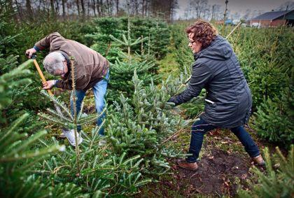<strong>Kerstboom  uitzoeken</strong>